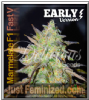 Delicious Marmalate F1 Fast V Fem 5 Weed Seeds